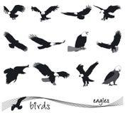 Vektorsammlung Schattenbilder von Adlern Stockfotos