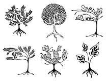 Vektorsatz der Hand gezeichneten Illustration, dekorativer dekorativer stilisierter Baum Grafische Schwarzweiss-Illustration loka Stockbild