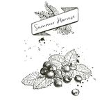 Vektorsatz der Sommerernte verziert mit Fahne und Flecken Blaubeere oder Moosbeere oder Brombeere und tadellose Blätter Stockbild