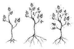 Vektorsatz Hand gezeichnete Illustrationen, dekorativer dekorativer stilisierter Baum Grafische Illustrationen, Schwarzweiss-Skiz Stockfoto