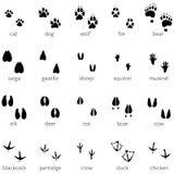 Vektorsatz Ikone mit 20 der Tierabdrücken Stockbilder
