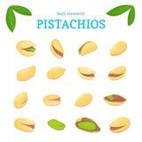 Vektorsatz Nüsse Die Pistacianussfrucht, ganz, abgezogen, das halbe Stück, Walnuss im Oberteil, verlässt Sammlungspistazie Lizenzfreies Stockbild