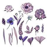 Vektorsatz nette Hand gezeichnete Blumen Rosen, Veilchen, Ranunculu Lizenzfreies Stockbild