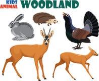 Vektorsatz nettes Waldland scherzt Tiere Stockbild