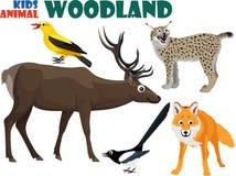 Vektorsatz nettes Waldland scherzt Tiere Stockfotografie