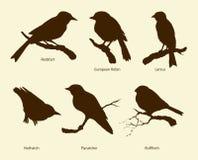 Vektorsatz Vögel: Bullfinch, Rotschwänzchen, Kleiber, Schnäpper, lizenzfreie abbildung