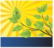 Vektorschablone eines Umweltschutzes Lizenzfreies Stockfoto