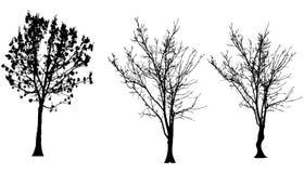 Vektorschattenbild des Baums stock abbildung