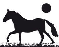 Vektorschattenbild des Pferds Stockfotografie