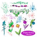 Vektorset av blommor Arkivfoto