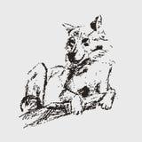 Vektorskizze des Wolfs Lizenzfreie Stockfotos
