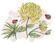 Vektorskizze mit gelben Chrysanthemen und Marienkäfern Stockfoto