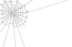 Vektorspinnenweb auf Weiß Stockbilder