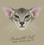 Vektorstående av den orientaliska katten royaltyfri illustrationer