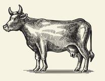 Vektorsvartko stock illustrationer