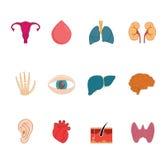 Vektorsymboler för mänskligt organ Rengöring modern anatomisymbolsuppsättning Arkivbilder