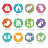 Vektorsymbolsuppsättning av mänskliga inre organ i plan stil