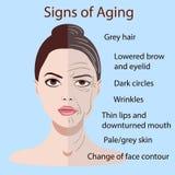Vektortecken av att åldras framsidan med två typer av hud, ungt och gammalt som isoleras Arkivbilder