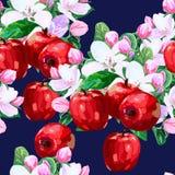 Vektorteckning av äppleblomningar Fotografering för Bildbyråer