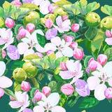 Vektorteckning av äppleblomningar vektor illustrationer
