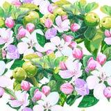 Vektorteckning av äppleblomningar Arkivfoton