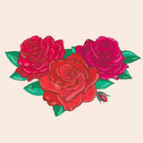 Vektorteckning av rosor Royaltyfria Bilder