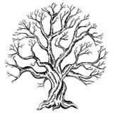 Vektorteckning av trädet stock illustrationer