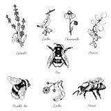 Vektoruppsättning av bin och blommor Fotografering för Bildbyråer