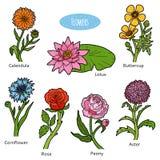 Vektoruppsättning av blommor, färgsamling stock illustrationer