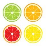 Vektoruppsättning av citronen, apelsin, limefrukt, grapefruktskivor Royaltyfri Foto