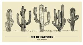 Vektoruppsättning av den hand drog kaktuns Skissa illustrationen Olika kakturs i monokrom stil stock illustrationer
