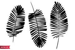 Vektoruppsättning av färgpulverteckningspalmblad, monokrom konstnärlig botanisk illustration, isolerade blom- beståndsdelar, drag stock illustrationer