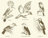 Vektoruppsättning av fåglar: galande hoopoe, oriole, hackspett, nötskrika, guld royaltyfri illustrationer