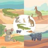 Vektoruppsättning av isolerade australiska djur för tecknad film Royaltyfria Bilder