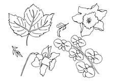 Vektoruppsättning av klotterblommor royaltyfri illustrationer