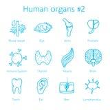 Vektoruppsättning av kontursymboler med mänskliga organ Royaltyfri Bild