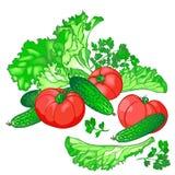 Vektoruppsättning av nya grönsaker för salladen av gurkor, tomat stock illustrationer