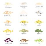Vektoruppsättning av sädesslag- och kornemblem För packande gryn kökkrustryck som annonserar sund mat stock illustrationer