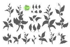Vektoruppsättning av tebuskefilialer royaltyfri illustrationer