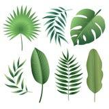 Vektoruppsättning av tropiska sidor stock illustrationer