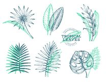 Vektoruppsättning av tropiska sidor Sidor för utdragen tropisk sommar för hand exotiska Djungelsidor, chamaerops, chalatea, strel vektor illustrationer