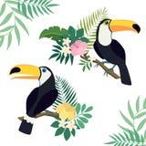 Vektoruppsättning av tukanfåglar på tropiska filialer med sidor och blommor vektor illustrationer