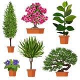 Vektoruppsättning av växten i kruka Royaltyfri Illustrationer
