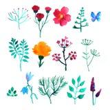 Vektoruppsättning av vattenfärgväxter stock illustrationer