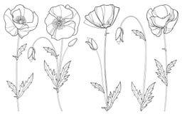 Vektoruppsättning med den översiktsvallmoblomman, knoppen och sidor i svart som isoleras på vit bakgrund Blom- beståndsdelar i ko Arkivbild