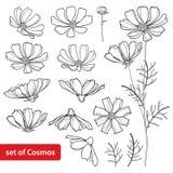 Vektoruppsättning med gruppen för översiktskosmos- eller Cosmea blomma, utsmyckat blad och knopp i svart som isoleras på vit bakg royaltyfri illustrationer