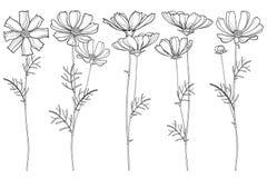 Vektoruppsättning med gruppen för översiktskosmos- eller Cosmea blomma, utsmyckat blad och knoppar i svart som isoleras på vit ba stock illustrationer