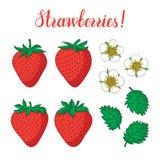 Vektoruppsättning med jordgubbar, blommor och sidor som isoleras på vit bakgrund Royaltyfria Bilder