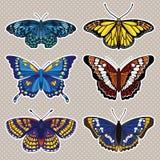 Vektoruppsättning med sex fjärilar Arkivbilder