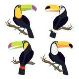 Vektoruppsättning med tukan stock illustrationer